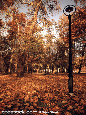 Autumn on the park